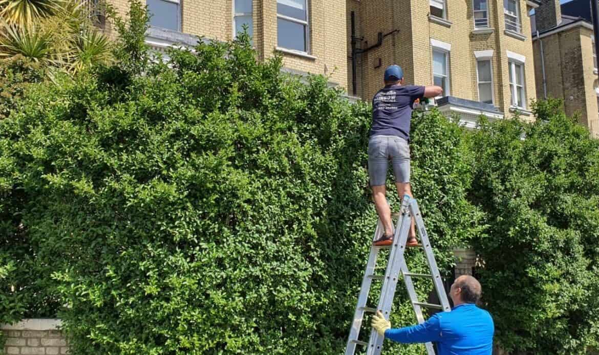 Hedge Trimming services in London